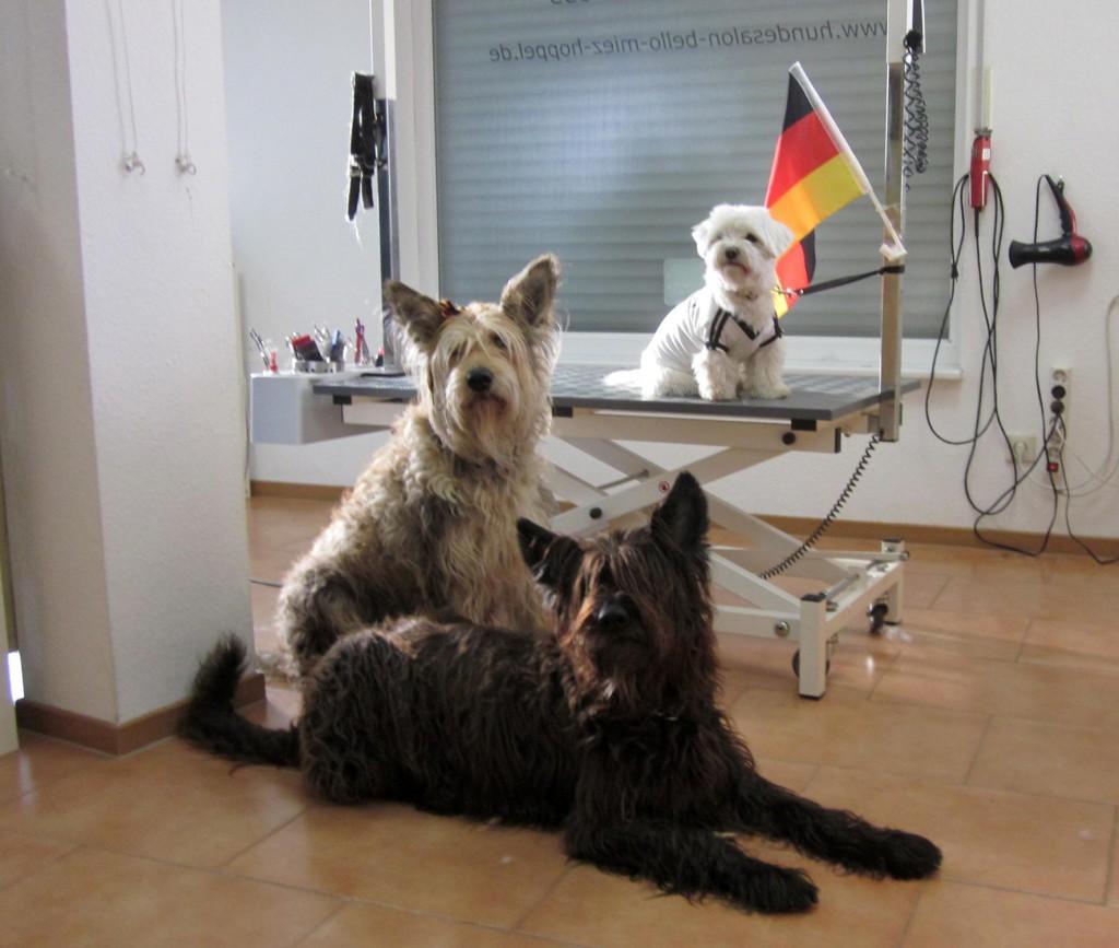 Fussballhunde-2